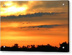 Geese Into The Sunset Acrylic Print