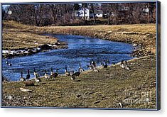 Acrylic Print featuring the photograph Geese On The Creek by Jim Lepard