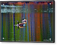 Acrylic Print featuring the photograph Geese On The Lake by Tara Potts
