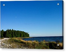 Geese Over Cana Island Acrylic Print by Pamela Schreckengost