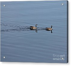 Geese Reflected Acrylic Print by Leone Lund