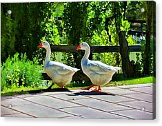 Acrylic Print featuring the photograph Geese Strolling In The Garden by Tracie Kaska