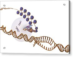 Gene Expression, Artwork Acrylic Print by Science Photo Library