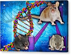 Gene Expression In Mice Acrylic Print