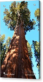 General Sherman Tree Acrylic Print by Debby Pueschel