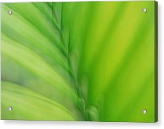 Acrylic Print featuring the photograph Gentle Breeze by Lorenzo Cassina