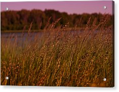 Gentle Breeze Acrylic Print by Miguel Winterpacht