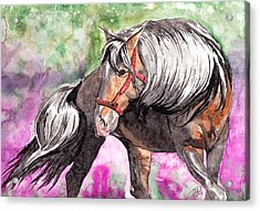 Gentle Dignity Acrylic Print by Kate Black