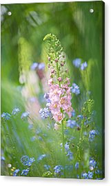Gentle Enchantment Acrylic Print