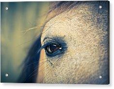 Acrylic Print featuring the photograph Gentle Eye by Priya Ghose