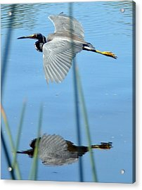 Gentle Flight Acrylic Print by Julie Cameron