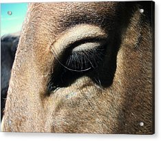 Gentle Soul Acrylic Print by Amy Ernst