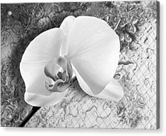Gentle White Orchid Acrylic Print by Ron Regalado