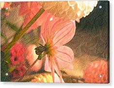 Gentleness Acrylic Print