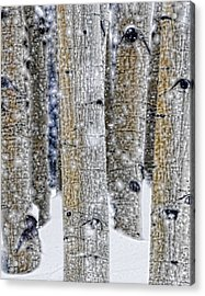 Gently Falling Forest Snow Acrylic Print by Don Schwartz