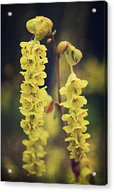 Gently Falling Acrylic Print by Laurie Search