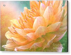 Gently Textured Dahlia  Acrylic Print