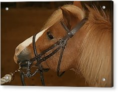 Acrylic Print featuring the photograph Genuine Pony by Jerome Lynch