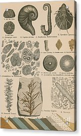 Geology And Paleontology 1886 Acrylic Print by Science Source
