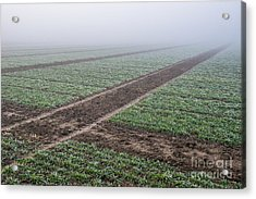 Geometry In Agriculture Acrylic Print by Hannes Cmarits
