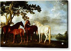 Acrylic Print featuring the painting Horses by George Stubbs