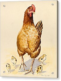 George's Hen And Her Chicks Acrylic Print by Alison Cooper