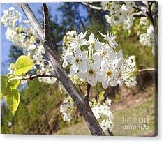 Georgia Blossoms Acrylic Print