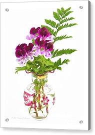 Geranium 'witchwood' Acrylic Print