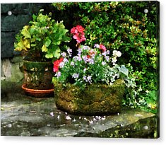 Geraniums And Lavender Flowers On Stone Steps Acrylic Print by Susan Savad