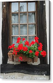 Geraniums In Timber Window Acrylic Print by Barbie Corbett-Newmin