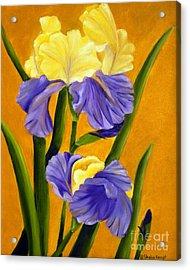 Acrylic Print featuring the painting German Bearded Iris  by Shelia Kempf