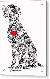 Acrylic Print featuring the drawing German Pointer by Melissa Sherbon