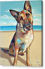 German Shepard  Acrylic Print by Robert Phelps