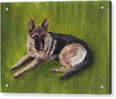 German Shepherd Acrylic Print by Anastasiya Malakhova