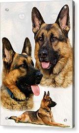German Shepherd Collage Acrylic Print by Sandy Keeton