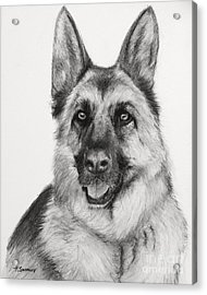 German Shepherd Drawn In Charcoal Acrylic Print