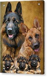 German Shepherd Family Collage Acrylic Print by Sandy Keeton