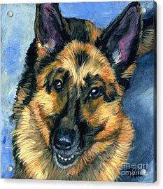 German Shepherd Acrylic Print by Hope Lane