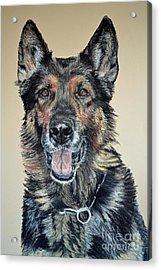 German Shepherd Jim Acrylic Print by Ann Marie Chaffin