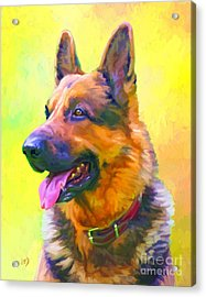 German Shepherd Portrait Acrylic Print by Iain McDonald