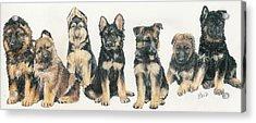 German Shepherd Puppies Acrylic Print by Barbara Keith