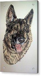German Shepherd Rudi Acrylic Print by Ann Marie Chaffin