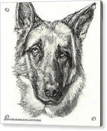 German Shepherd Sketch No.1 Acrylic Print