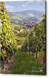 German Vineyard Acrylic Print by Sharon Foster