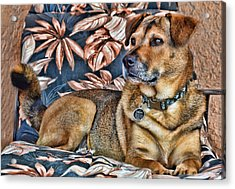 Acrylic Print featuring the photograph Gerry And The Lounge Chair by Barbara Manis
