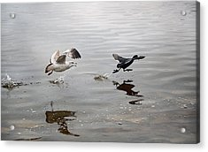 Get Back Here.... Acrylic Print by Steven  Michael