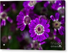 Getting Noticed Acrylic Print by Syed Aqueel