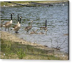 Getting Our Feet Wet Acrylic Print