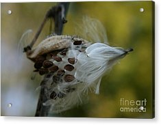 Getting Ready For Flight No.3 Acrylic Print by Neal Eslinger