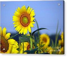 Getting To The Sun Acrylic Print